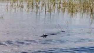 Sexy badass babes visited cranky crocs and enjoying it